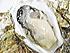 仙鳳趾生牡蠣